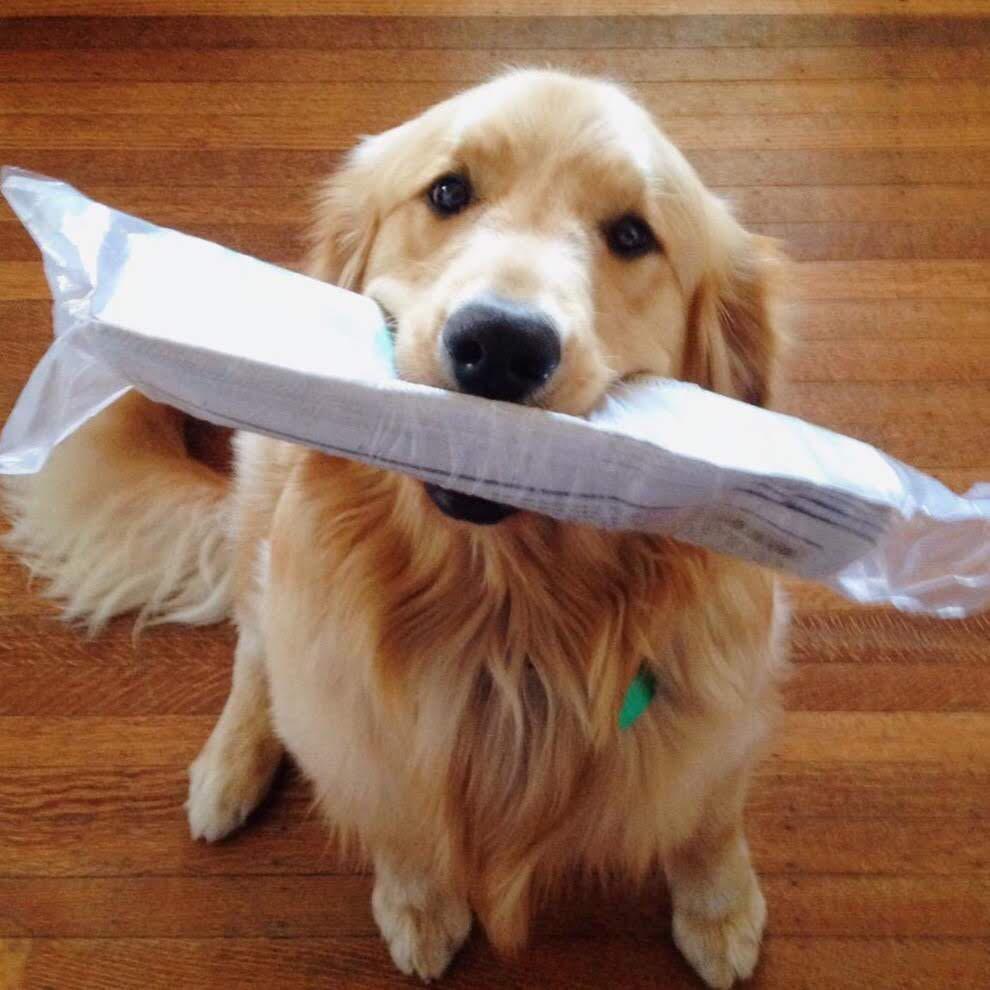 dog news.jpg